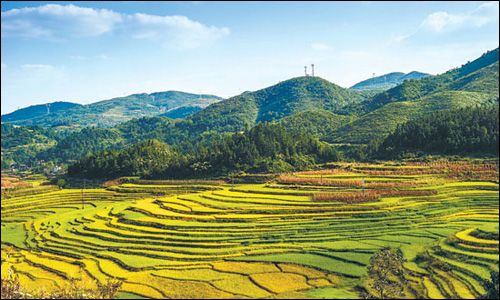 壁纸 成片种植 风景 植物 种植基地 桌面 500_300